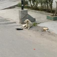 dog on street in India